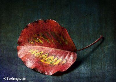 Leaves macro_8927