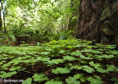 Muir Woods_1300