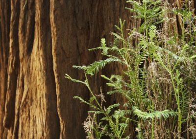 Muir Woods_1316