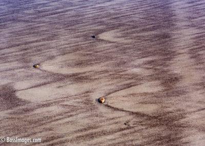 Ormond sand & stones-1