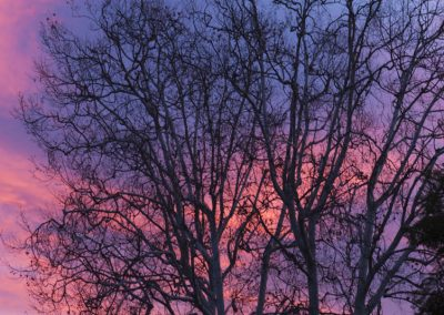 sunrise tree crows-4